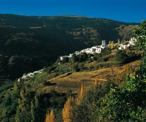 Motril-Granada - Media Gallery 8